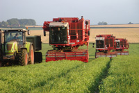 Fen Peas Ltd (Harvest)